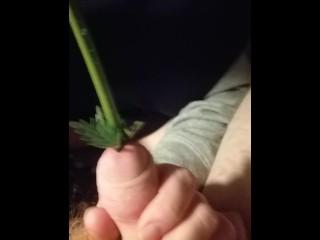Femdom CBT - Tied cock gets nettle stalk pushed deep inside urethra